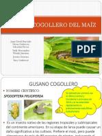 Gusano Cogollero Del Maíz
