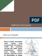 Nervus Fascialis