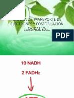 Cadena de Transporte de Electrones y Fosforilacion Oxidativa