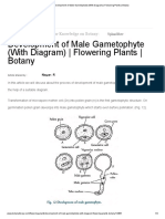 Development of Male Gametophyte (With Diagram) _ Flowering Plants _ Botany Awais