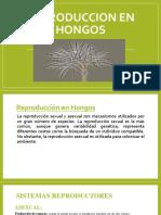 REPRODUCCION EN HONGOS.pptx