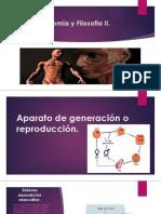 Anatomía y Filosofía II Exposicion