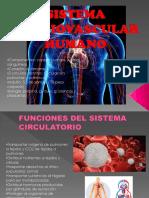 Sistema Cardiovascular Humano