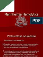 2.- MANNHEIMIA HAEMOLITICA.ppt