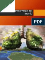El Pulmón Verde Del Mundo