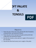 Bds Ppt for Soft Palate & Tonsil-converted
