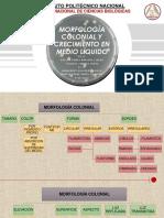 Morfología Colonial y Crecimiento en Medio Líquido e6l3 e1l4