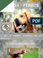 en034-perros-170106162431