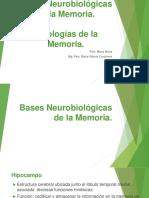 2-sustrato neuroanatómico