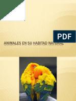 Animales en Su Habitad Natural