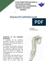 Clase 4 to Esqueleto Apendicular
