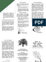 How to Plant Acorns Brochure 04