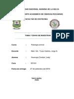 Informe Pato 4