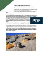 Especies en Peligro de Extinción en Bolivia