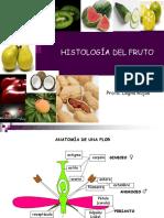 histologia de semillas parte 2