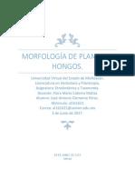 Morfologia de Plantas y Hongos