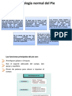 Histologia normal del pie.ppt