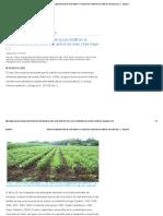 Efecto de la aplicación foliar de Quick-Sol® en el crecimiento y rendimiento del cultivo de maíz (Zea mays L.) - Engormix