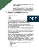 5. Problemas Ambientales Del Olivo