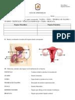 Guía Sistema Reproductor