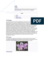 Flora Peru