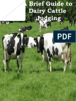 A Brief Guide to Dairy Cattle Judging