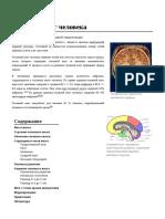 Головной_мозг_человека