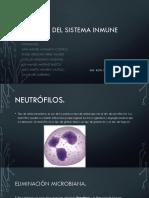 Equipo 6 Células del Sistema Inmune