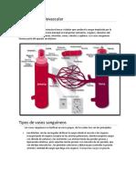 Cardiaco-Respiratorio-Digestivo