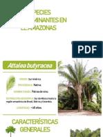 Spp hiperdominantes en el amazonas