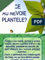 De Ce Au Nevoie Plantele