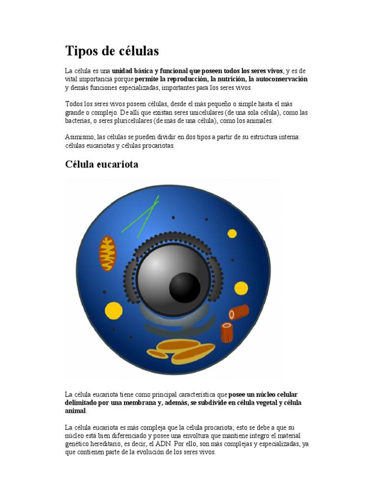 Tipos De Células Eucariotas Célula Biología