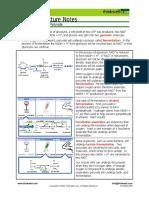 Fermentation Pyruvate.pdf
