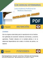 Ovario Patologia