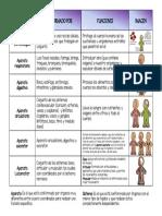 cuadro comparativo sistemas y aparatos.pdf