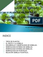 MORFOLOGÍA DE SEMILLAS Y PLÁNTULAS PARA LAS PRUEBAS (1).pdf