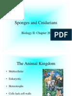 C-26 Sponges and Cnidarians