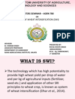 System of wheat Intensification