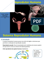 Sistema Reprodutor