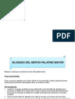Palatino Mayor