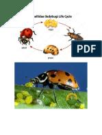 Exposicion Insecto