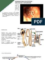 Tenia Solium Ppt.pptx-1