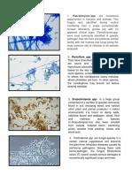 pictures 24 fungi].docx