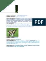 Nombre Cientifico de Insectos