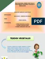 290119168-Diapositiva-de-Botanica.pptx