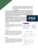 Tipos de Carbohidrato1