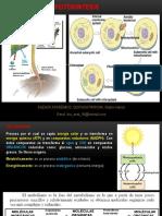 Biología - Fotosíntesis