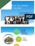 Expo Vacuno