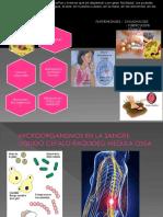 Microorganismos Medula Osea Arreglado