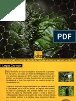 dossier lagos.pdf